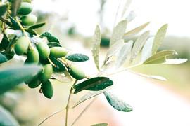 Oprema za oljke